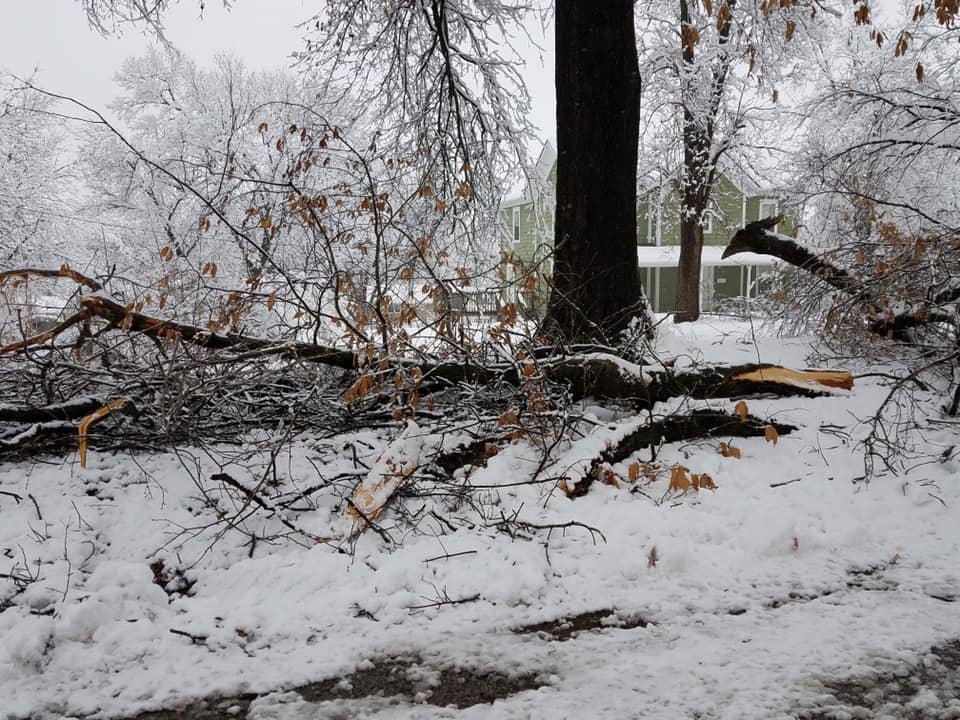 A tree limb laying in snow after falling from tree.